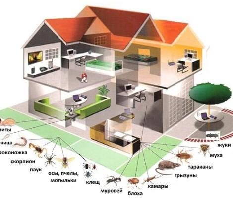 Профессионально уничтожаем насекомых | грызунов | запахи | бактерии